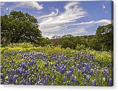 Bluebonnet Spring Acrylic Print