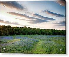 Bluebonnet Trail Ennis Texas 2015 V5 Acrylic Print
