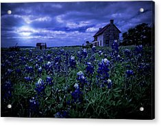Acrylic Print featuring the photograph Bluebonnets In The Blue Hour by Linda Unger