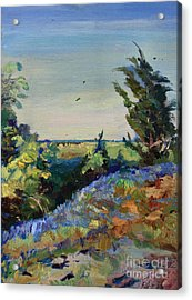 Bluebonnets On A Hill Acrylic Print by Maris Salmins