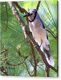 Bluejay Acrylic Print by Roena King