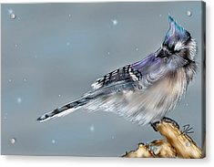 Acrylic Print featuring the digital art Winter Bluejay by Darren Cannell