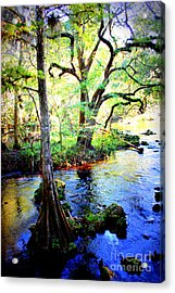 Blues In Florida Swamp Acrylic Print by Carol Groenen
