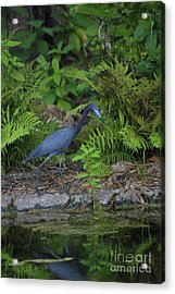 Blues' Lagoon Acrylic Print by Dodie Ulery