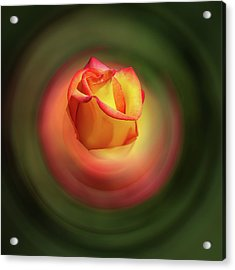 Bluring The Rose Acrylic Print by Dale Stillman