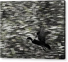 Acrylic Print featuring the photograph Blurry Bird by Ron Dubin