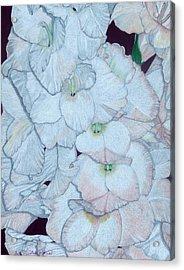 Blush Acrylic Print