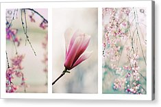 Acrylic Print featuring the photograph Blush Blossom Triptych by Jessica Jenney