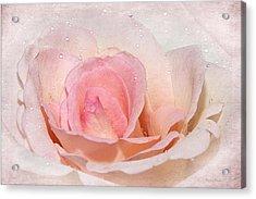 Blush Pink Dewy Rose Acrylic Print