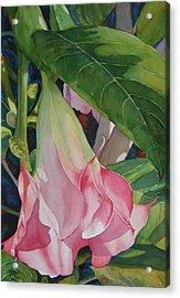 Blushing Angel Acrylic Print by Judy Mercer