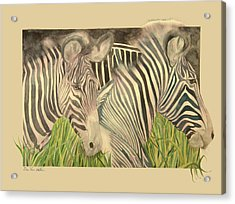 Zebra Blushing Stripes Acrylic Print