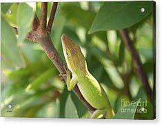 Blusing Lizard Acrylic Print