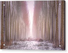 Boardman Tree Farm  Acrylic Print