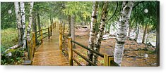 Boardwalk Along A River, Gooseberry Acrylic Print by Panoramic Images
