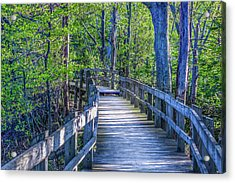 Boardwalk Going Into The Woods Acrylic Print