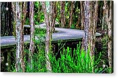 Boardwalk In The Woods Acrylic Print