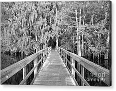 Boardwalk Into The Cypress In Black And White Acrylic Print by Adam Jewell