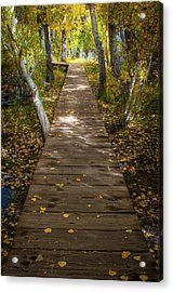 Boardwalk Over Convict Creek Acrylic Print by Ralph Vazquez