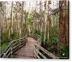 Boardwalk Through Corkscrew Swamp Acrylic Print by Barbara Bowen
