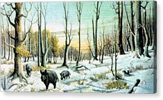 Boars In Winter - Sold Acrylic Print by Florentina Popa