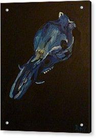 Boar's Skull No. 2 Acrylic Print