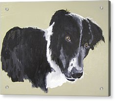 Bob The Border Collie Acrylic Print