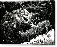 Bobcat Among Elk Acrylic Print by Dawn Senior-Trask