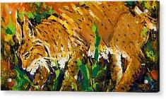 Bobcat Acrylic Print by Mary DuCharme