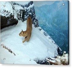 Bobcat On A Mountain Ledge Acrylic Print by Chris Flees