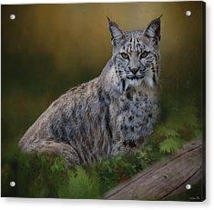 Bobcat On Alert Acrylic Print