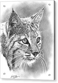 Bobcat Acrylic Print by Reed Palmer