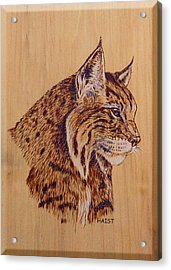 Acrylic Print featuring the pyrography Bobcat by Ron Haist