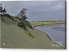Bodega Dunes Acrylic Print