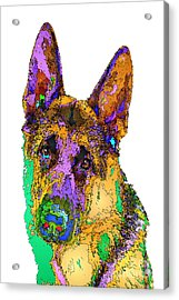 Bogart The Shepherd. Pet Series Acrylic Print