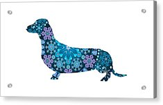 Bohemian Blue Dachshund Acrylic Print by Lisa Crisafi