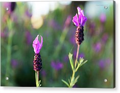 Acrylic Print featuring the photograph Bokehlicious Bloom by Lora Lee Chapman