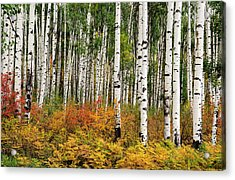 Acrylic Print featuring the photograph Bold And Magnificent Autumn by Tim Reaves