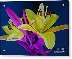 Acrylic Print featuring the photograph Bold Beautiful Flowers by Ray Shrewsberry
