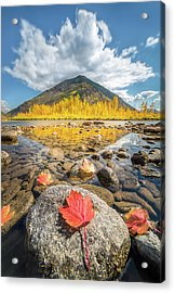Bold Fall Colors // Flathead River, Glacier National Park  Acrylic Print