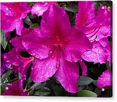 Bold Pink Flower Acrylic Print