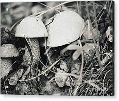 Acrylic Print featuring the photograph Boletus Mushrooms by Juls Adams