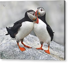 Bonded And Banded Acrylic Print by Tony Beck