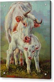 Bonded Cow And Calf Acrylic Print