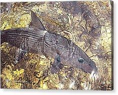 Bonefish World Acrylic Print by Alex Suescun