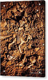 Bones From Ancient Times Acrylic Print