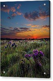 Bonnie's Meadow Acrylic Print by Phil Koch