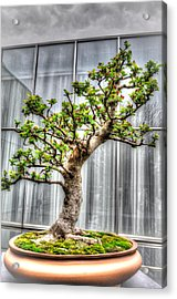 Bonsai Tree II Acrylic Print by Wade Brooks