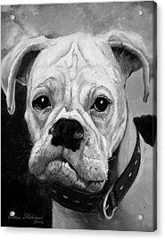 Boo The Boxer Acrylic Print by Enzie Shahmiri