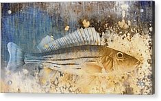 Book Of Fish Collage Acrylic Print by Carol Leigh