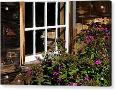 Books In The Window Acrylic Print by Lois Lepisto